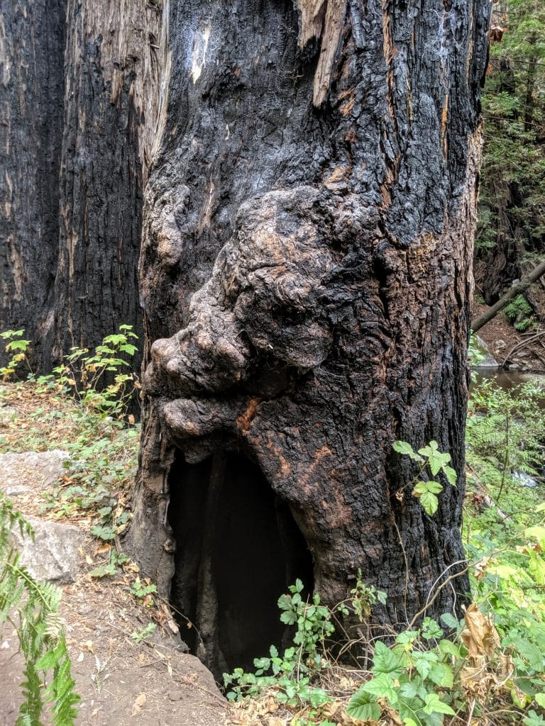 Limekiln State Park Trail